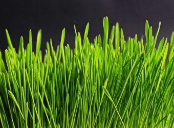 Jak se správně starat o trávník?
