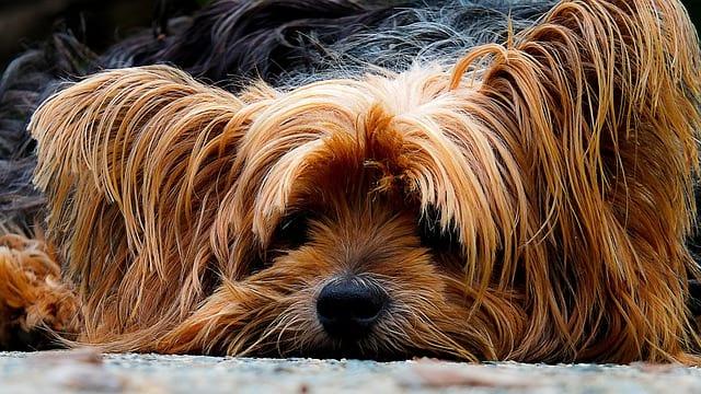 Jak správně krmit psa?