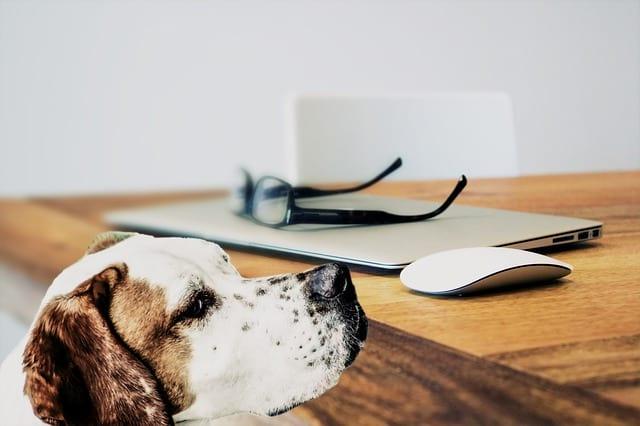Jak pozitivně motivovat psa při cvičení