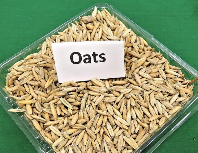 Sadba a osivo – Informace o sadbě a osivu