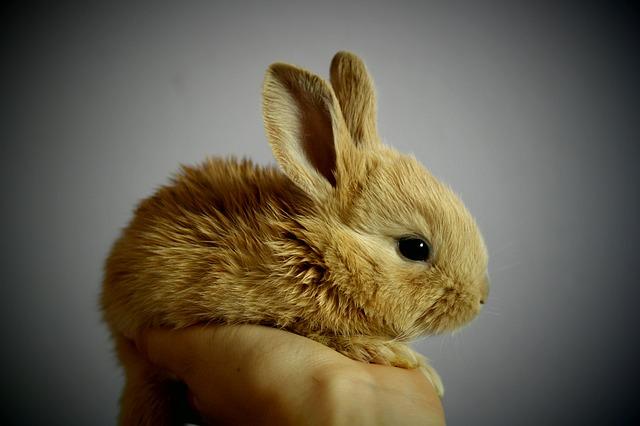 Jak naučit králíka chodit na toaletu