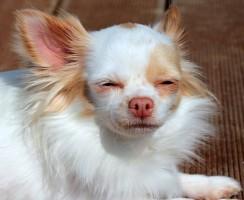 Zkušenosti: Jak poznat alergie u psa