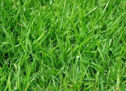 Výběr travního semene