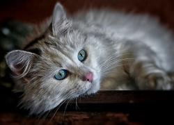 Jaký vliv mají kočky na lidské zdraví?