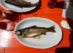 Jak vyudit ryby v troubě?
